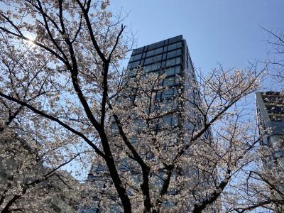 ホテルと桜のコラボレーション
